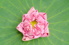 The art of folding lotus Stock Images