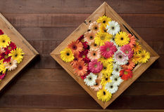 The art of the Gerbera Stock Image