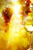 Art the glass of wine and Ripe grapes Stock Photos
