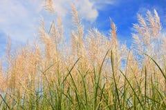 Art grass  view Stock Image