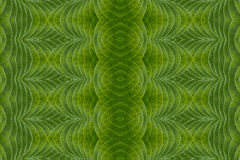 Art of green leaf and idea concept. Royalty Free Stock Images