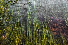 Art of green river weed in red rock bottom river stock images