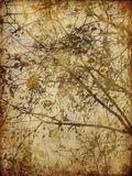 Art grunge floral background. Card Royalty Free Stock Photo