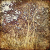 Art grunge forest background card Stock Photography