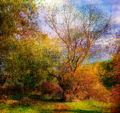 Art grunge landscape showing colorful wild forest Stock Image