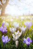 Art Happy Easter day; Spring flowers on sunny field stock photography