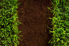 Art healthy grass growing in soil pattern Stock Images