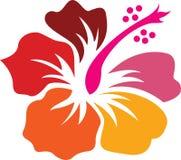 Art hibiscus Stock Images