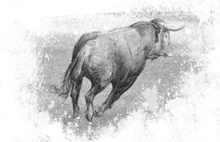 Art illustration, Spanish bull in the bullring with sand Royalty Free Stock Photography