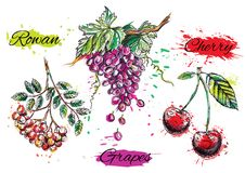 Art illustration of watercolor fruits. Vector EPS Royalty Free Stock Images