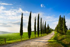 Art italy countryside landscape with cypress trees on the  mountain Stock Photography
