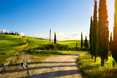 Italy countryside landscape with cypress trees on the  mountain Royalty Free Stock Photos
