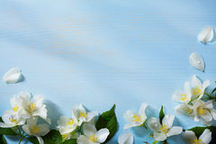Art jasmine Flowers Border Royalty Free Stock Images