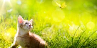 Art  little kitten  hunting a butterfly Stock Photo