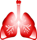 Art lung. Illustration art of a lung with isolated background Stock Photo