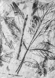 Art monochrome autumn leaves background in white, black and grey Royalty Free Stock Photo