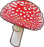 Detailed vector amanita. Art with mushroom on white background Stock Photos