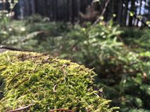 Art of nature. This picture shows mossy stump Stock Photos