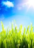 Art  nature spring background Stock Image