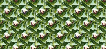 Art Nouveau Pattern With Fantasy Flowers Stock Photography
