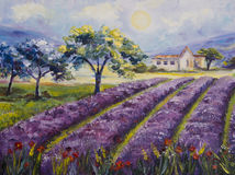 Art Oil-Painting Picture Lavender Fields in Italy.  Stock Photos