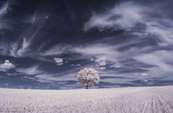 Infrared photography - ir photo of landscape with tree under sky with clouds stock photos