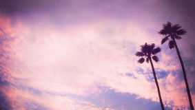 Art Palm tree gritty grunge backround Royalty Free Stock Photo