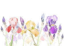 Art Pastel background with Beautiful iris flower Stock Image