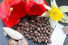 Art Photo, chicchi di caffè accanto al fiore rosso Fotografie Stock Libere da Diritti