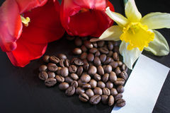 Art Photo kaffebönor bredvid den röda blomman Royaltyfri Fotografi