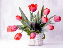 Free Art Photo Of A Beautiful Bouquet Of Tulips On A Gray Background. Stock Photo - 148502890