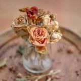 Art photography. Roses withered in a glass vase. royalty free stock photography