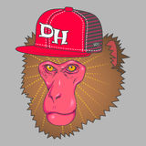 Art pink monkey face wearing a rad cap Stock Photography
