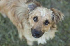 Art Portrait fino del perro Imagen de archivo libre de regalías