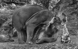 Art portrait of a woman taming an elephant. Art portrait of a woman taming a young elephant Stock Image