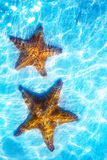 Art real live seastar on a white sand  background. Art real live  seastar on a white sand  background Stock Images