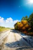 Art Road i skog Arkivbild