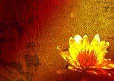 Art. Rode lelie op een vijver. stock foto's