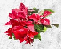 Art rouge de fractale de poinsettia photos stock