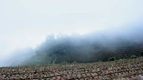 Art rural landscape. Strawberry Field on mountain with fog. At countryside stock video footage