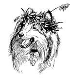 Art scottish shepherd. Graphic illustration art scottish shepherd dog in a herb wreath Royalty Free Stock Photos