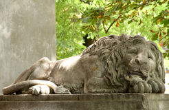Art sculpture of a lion. City of Lviv, Ukraine. Royalty Free Stock Photography