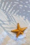 Art Sea stjärna på strandbakgrunden Arkivfoto