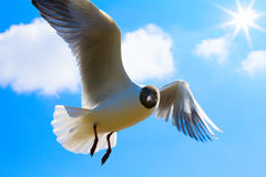 Art Seagull in blue sky background Stock Image