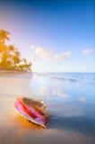 Art Shell sulla spiaggia tropicale Immagine Stock