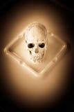 Art Skull Royaltyfria Bilder