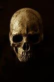 Art skull Royalty Free Stock Photos