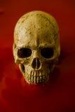 Art skull Stock Photography