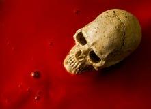 Art skull Stock Image