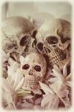 Art skull Stock Photo